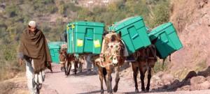 Shelterboxen auf dem Weg zu Hilfsbedürftigen
